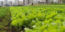 Pandemia reduz renda de quase 70% dos produtores de hortaliças e frutas, diz pesquisa